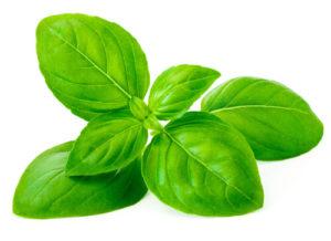 Basil Herb Leaves