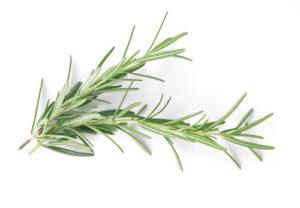 Rosemary Herbs