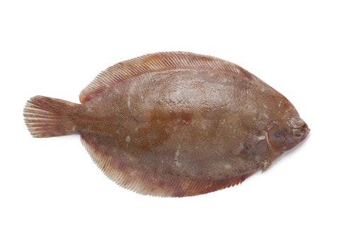 Sole as substitute for halibut